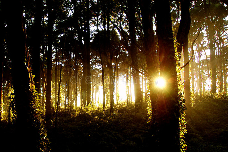 Light forest2 royalty free stock image