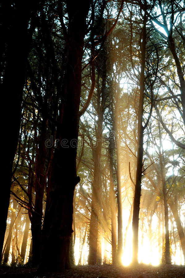 Light forest5 royalty free stock photography