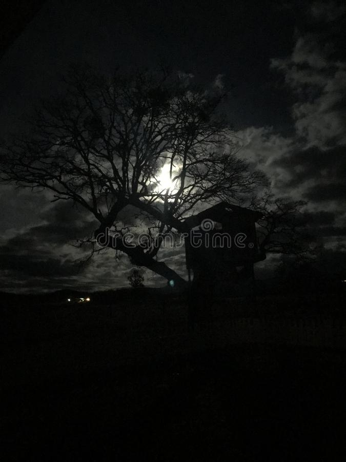 Light of the full moon peeks through barem leafless tree in autumn creating a spooky scence. Haunted tree house illuminated by moonlight. The tree branches royalty free stock photos