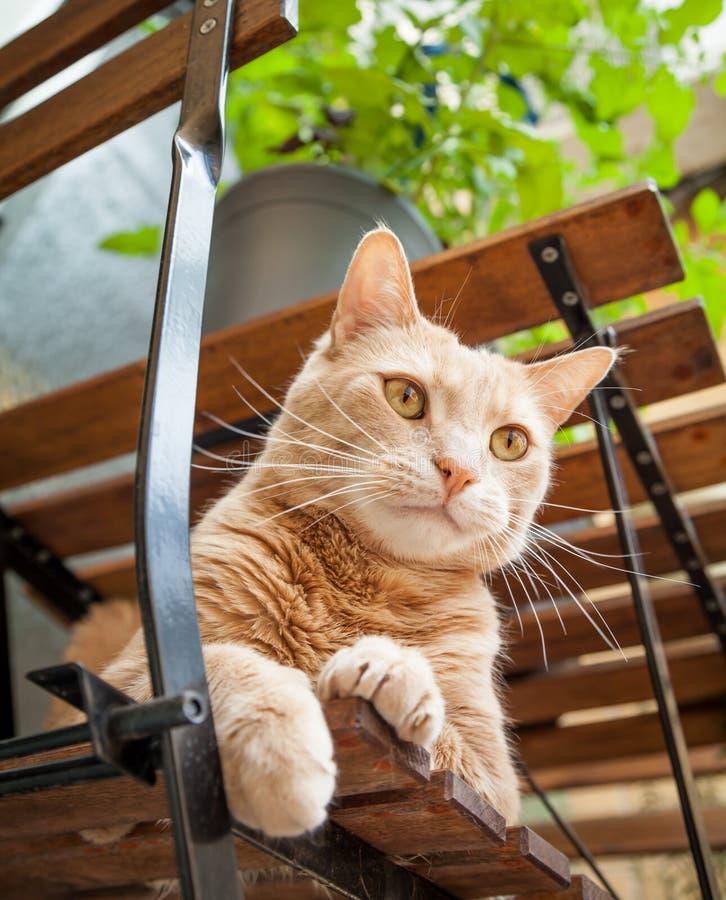 Light Ginger Tabby Cat Sitting On Chair Outside Under ...