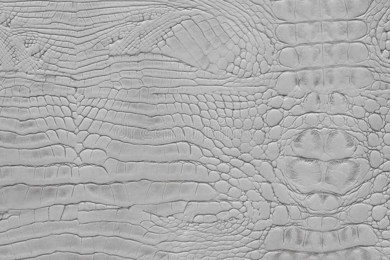 Light grey color animal snake print texture leather background stock photo