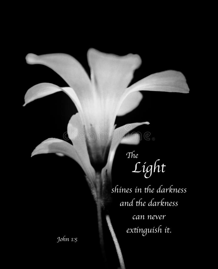 The Light - inspirational black & white delicate flowers with bible verse stock photos