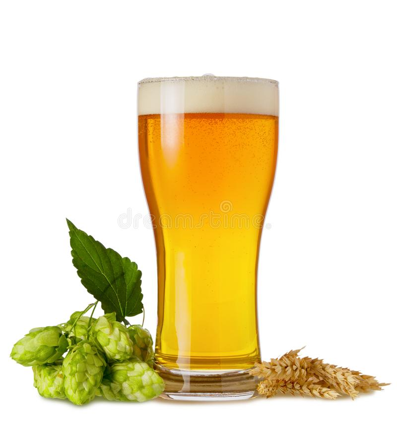 Light Ipa beer in glass with branch hops cones and wheat ears isolated on white background royalty free stock photography