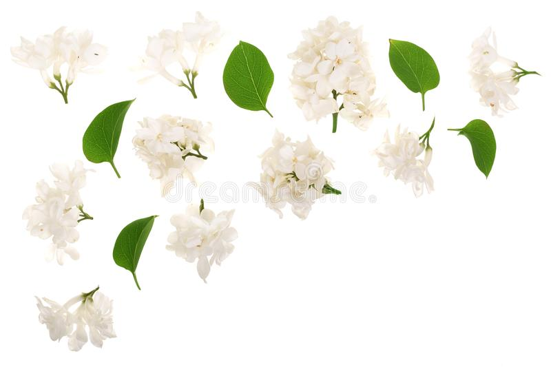 Light lilac flowers, branches and leaves isolated on white background with copy space for your text. Flat lay. Top view.  vector illustration