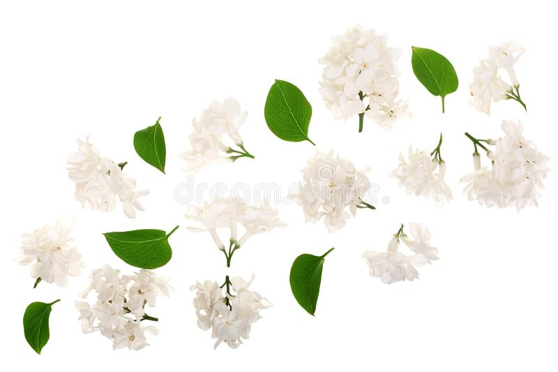Light lilac flowers, branches and leaves isolated on white background. Flat lay. Top view. Light lilac flowers, branches and leaves isolated on white background stock illustration