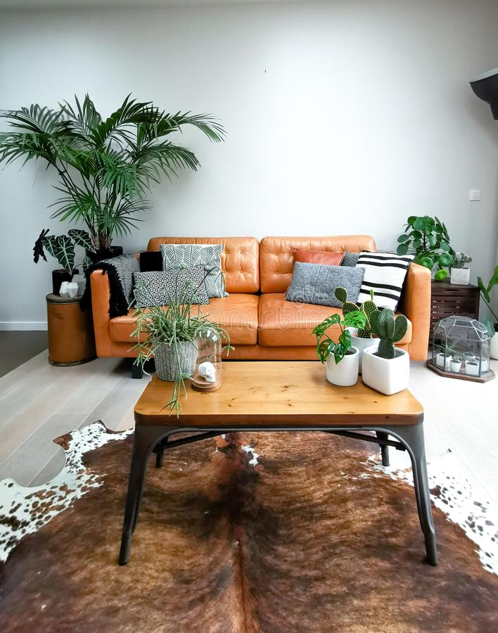 Light modern living room with a brown leather couch and numerous houseplants creating an urban jungle stock image