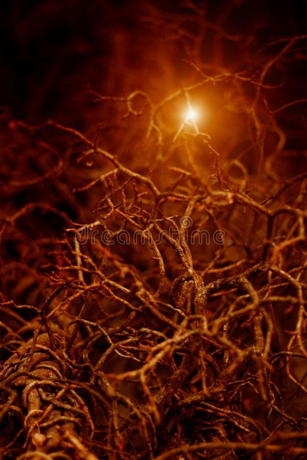 Light in night forest royalty free stock image