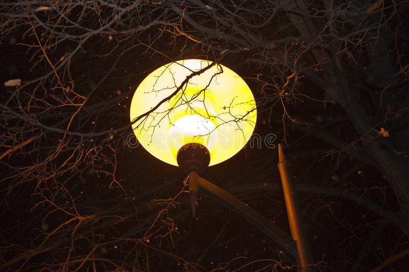Light of a night lamp illuminated the branches of the trees stock image