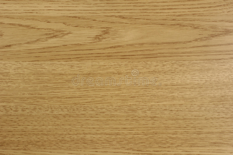 Light oak royalty free stock photo
