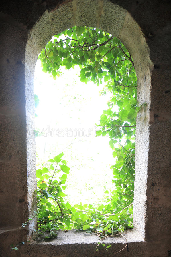 Light From Outside With Leaves Stock Images