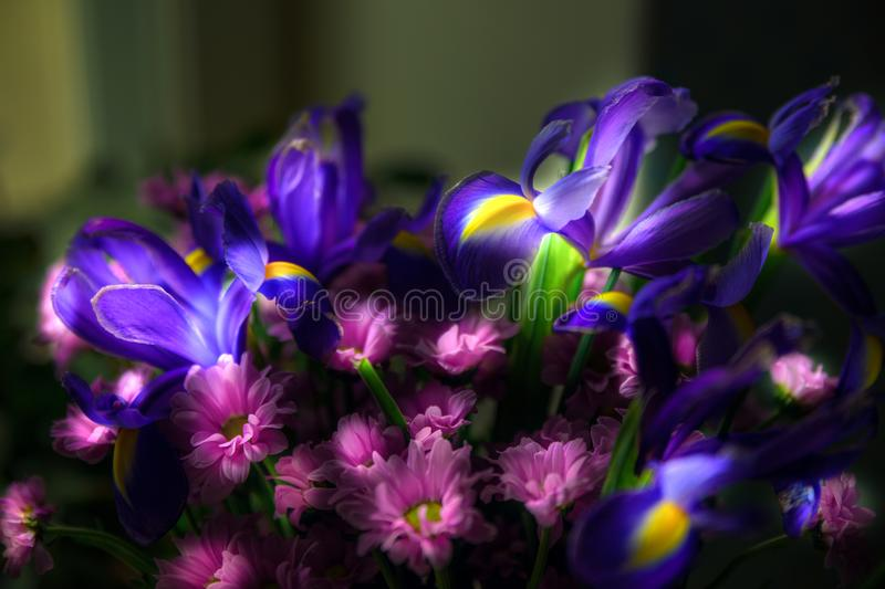 Light painting of colorful bouquet flowers. stock photography
