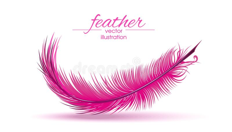 Light pink feather isolated on white background vector illustration