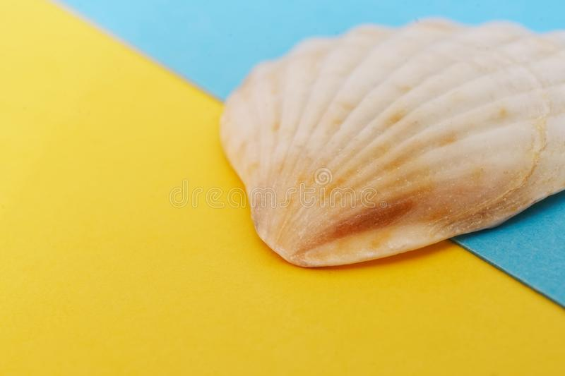 Light pink seashell on a blue and yellow background, symbolizing the sea and the beach. Travel and tourism related items. Close-up. Shallow depth of field stock image