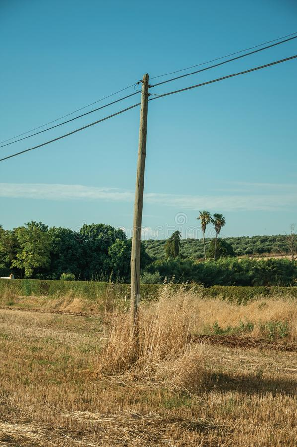 Light poles over field covered by straw stock photography