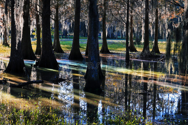 Download Light Reflexion In A Marshland Stock Photo - Image: 33389024