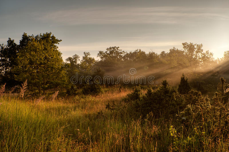 Light of the rising sun over the meadow royalty free stock photo