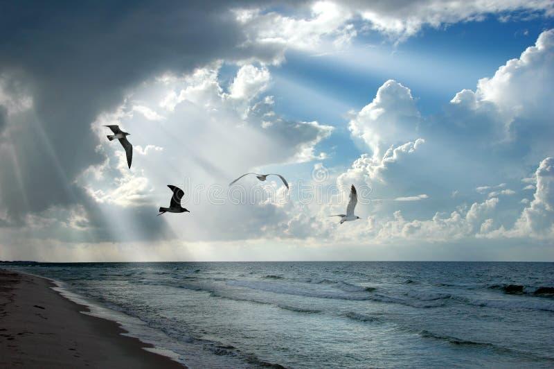 Light and Seagulls stock photos