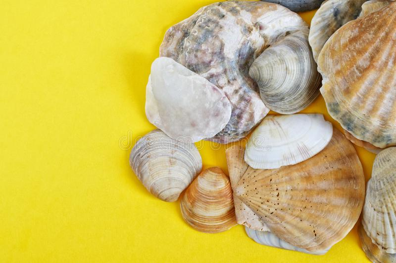 Light seashells on a yellow background symbolizing sand on a coastal beach. Travel and tourism related items. Copy space. Daylight stock photos