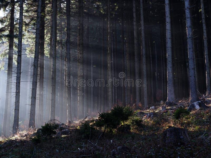 Light shining through mist stock image