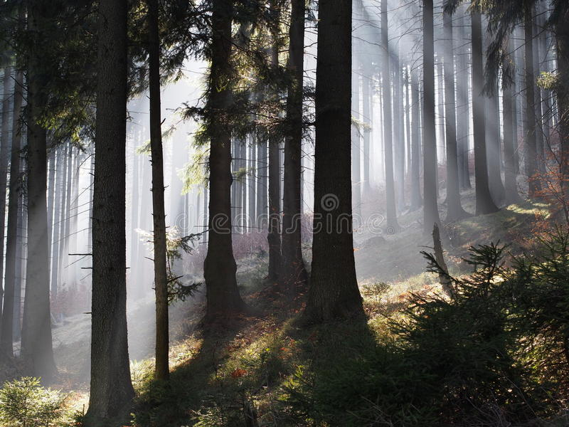 Light shining through mist royalty free stock photos