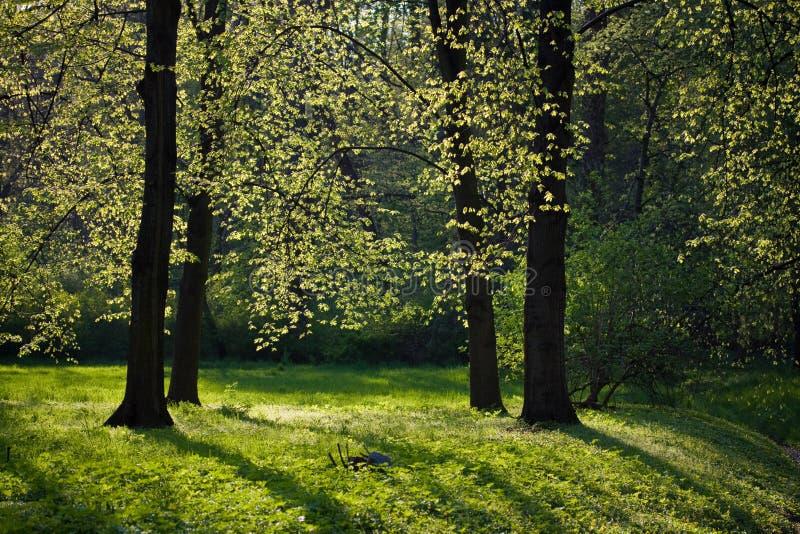 Download Light Shining Through Trees Stock Photo - Image: 25400968