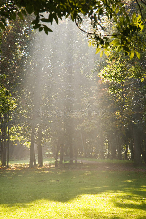 Light from the sky. Sunlight is fallen from the sky on a beautiful autumn day stock photos
