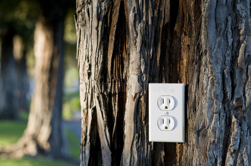 Light socket. Energy concept, plus into the energy of living trees, redwood tree with light socket, nice late day lighting royalty free stock image