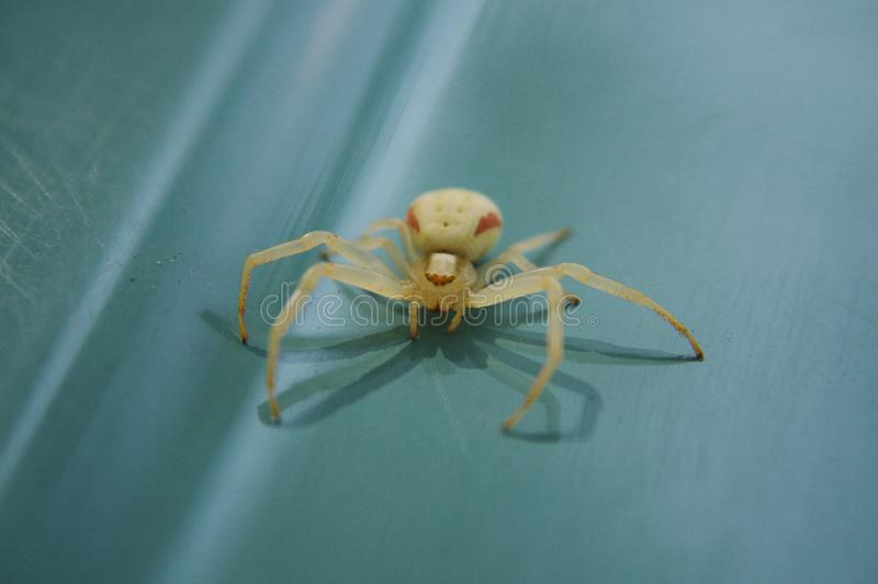 Light a spider on blue background. stock photo
