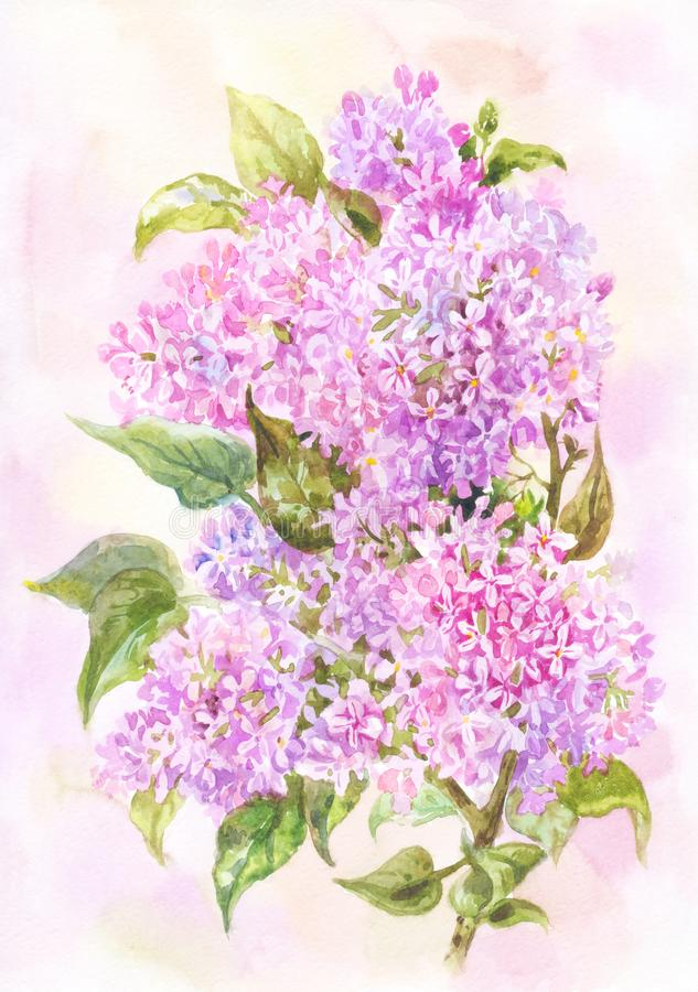 Light spring or summer watercolor. Branch of beautiful lilac. Botanical illustration or background. Watercolor lilac branch. Light summer illustration. Delicate stock illustration