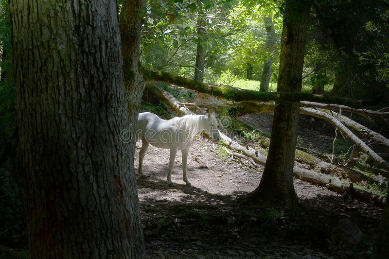 Download Light Stallion stock photo. Image of shine, cades, glow - 43551136