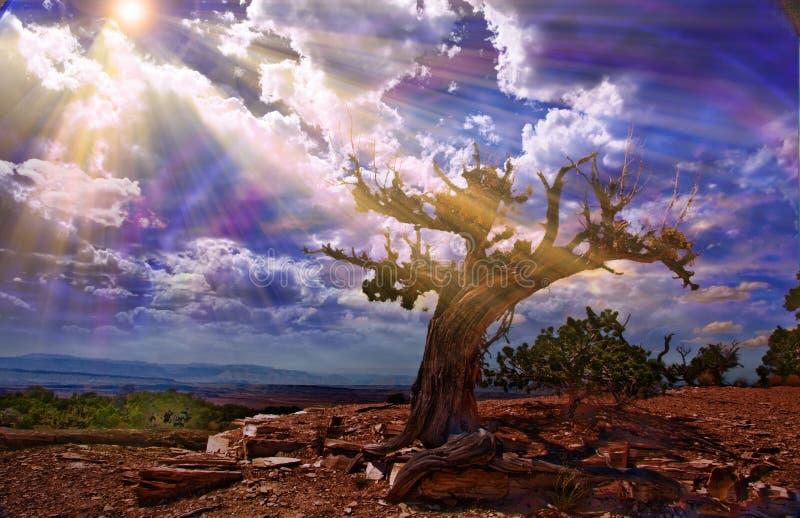 Light streams into rocky desert. Scene royalty free illustration