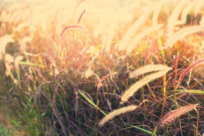 Light through summer grass bokeh Natural background. Green yellow colors stock photo