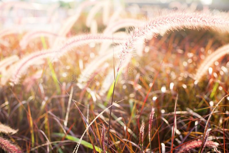 Light through summer grass bokeh Natural background. Green yellow colors royalty free stock photo
