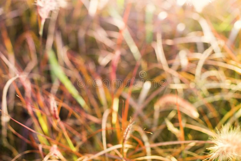 Light through summer grass bokeh Natural background. Green yellow colors stock images