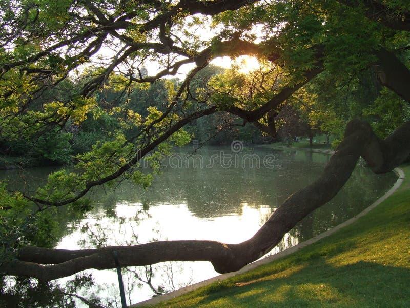 Light. Sunset in Parc des Buttes-Chaumont stock photos