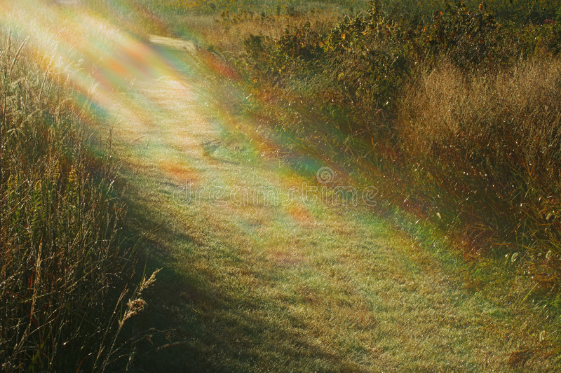 Light to my Path royalty free stock image
