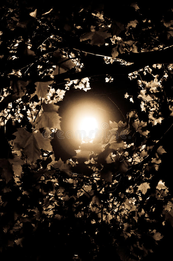 Download A Light Through the Trees stock image. Image of night - 16340345