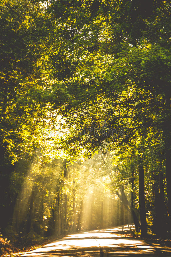 Light through the trees royalty free stock photography