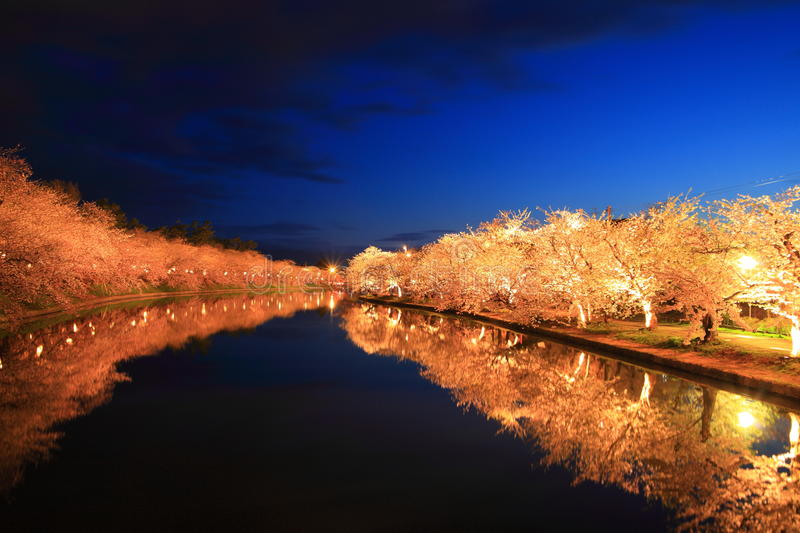 Download Light up of cherry tree stock image. Image of asian, cherry - 30999369