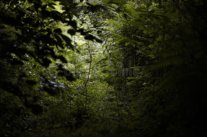 Download Light through woods stock photo. Image of scrub, green - 2315916