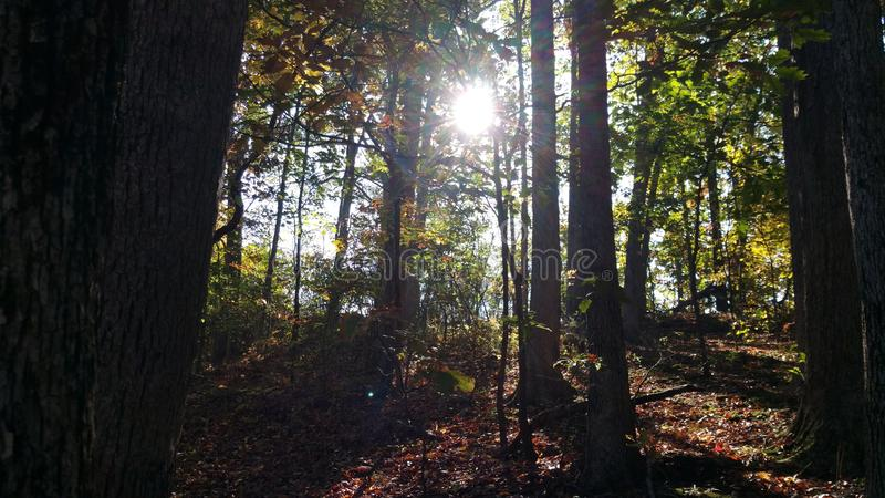 Light through the woods stock photo