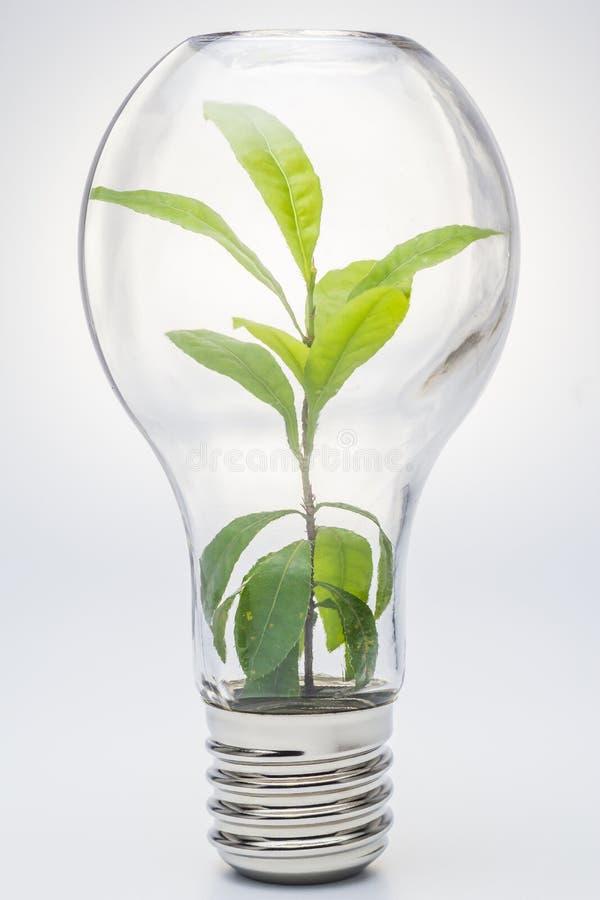 Lightbulb, Lightbulb z rośliny dorośnięciem inside fotografia stock