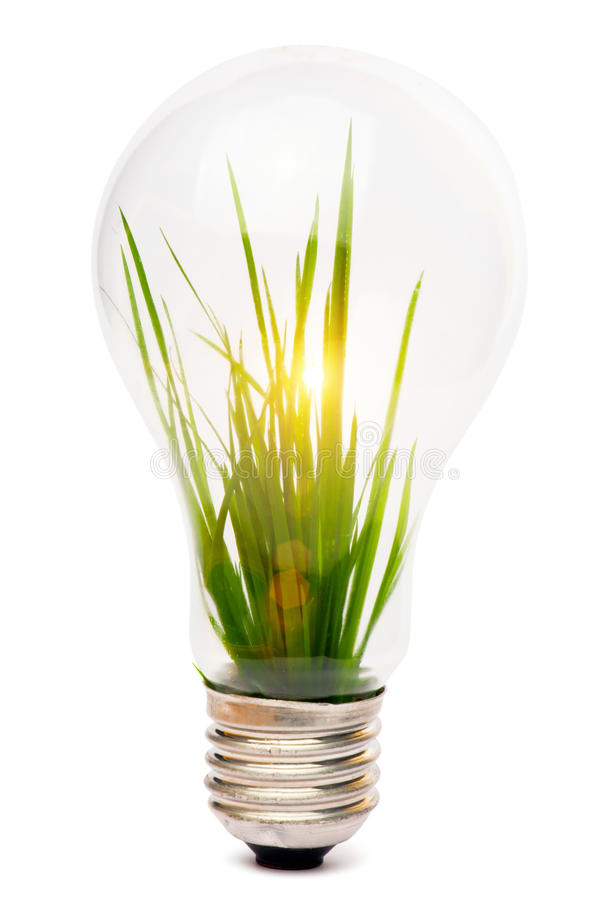 Lightbulb With Plant Royalty Free Stock Images