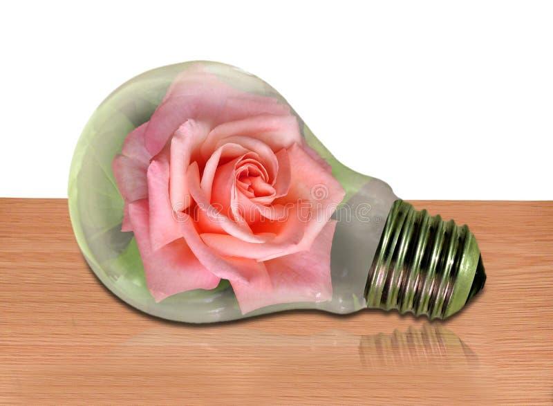 Lightbulb rose flowers greenhouse climate change concept ozone stock image