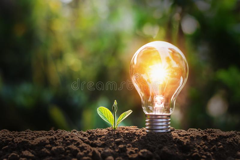 lightbulb with small plant on soil and sunshine. concept saving energy royalty free stock photography