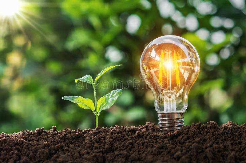 lightbulb with small tree on soil in nature and sunshine. concept saving royalty free stock photo