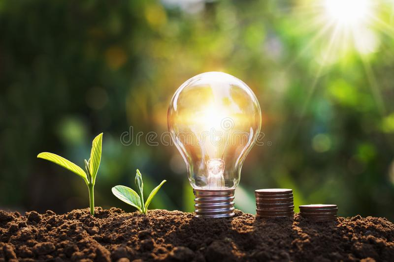 Lightbulb with tree and coins on soil sunshine background concept saving energy and finance. Nature, money, white, stack, design, financial, business, bright royalty free stock photography
