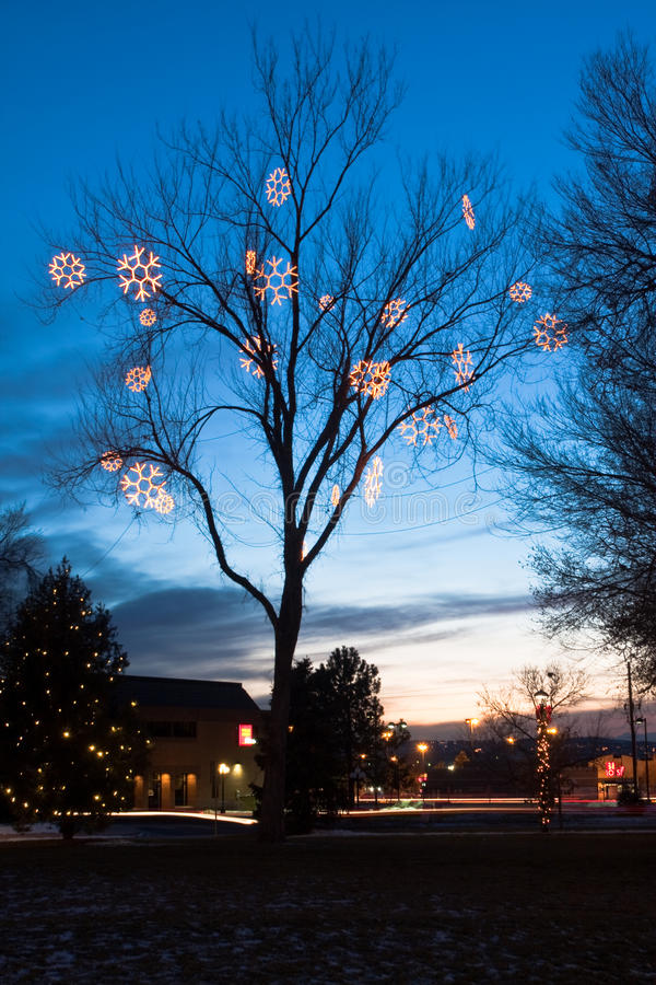 Download Lighted Cottonwood at Dusk editorial photo. Image of shops - 25881386