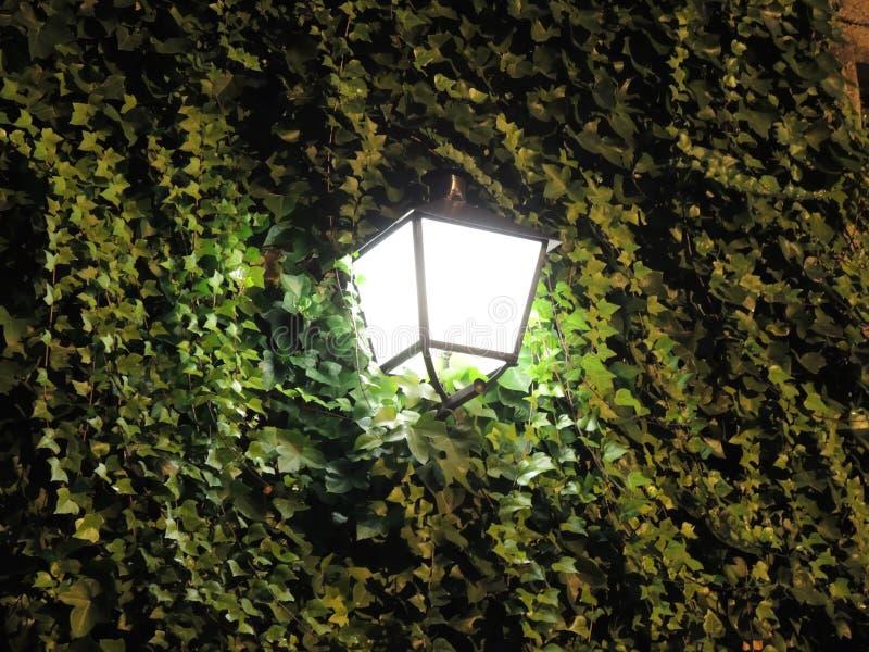 Lighted lantern. At night street stock photography