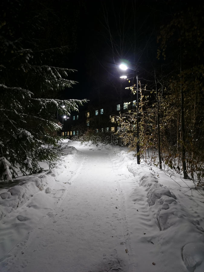 Lighted path. Through winter night park royalty free stock photo